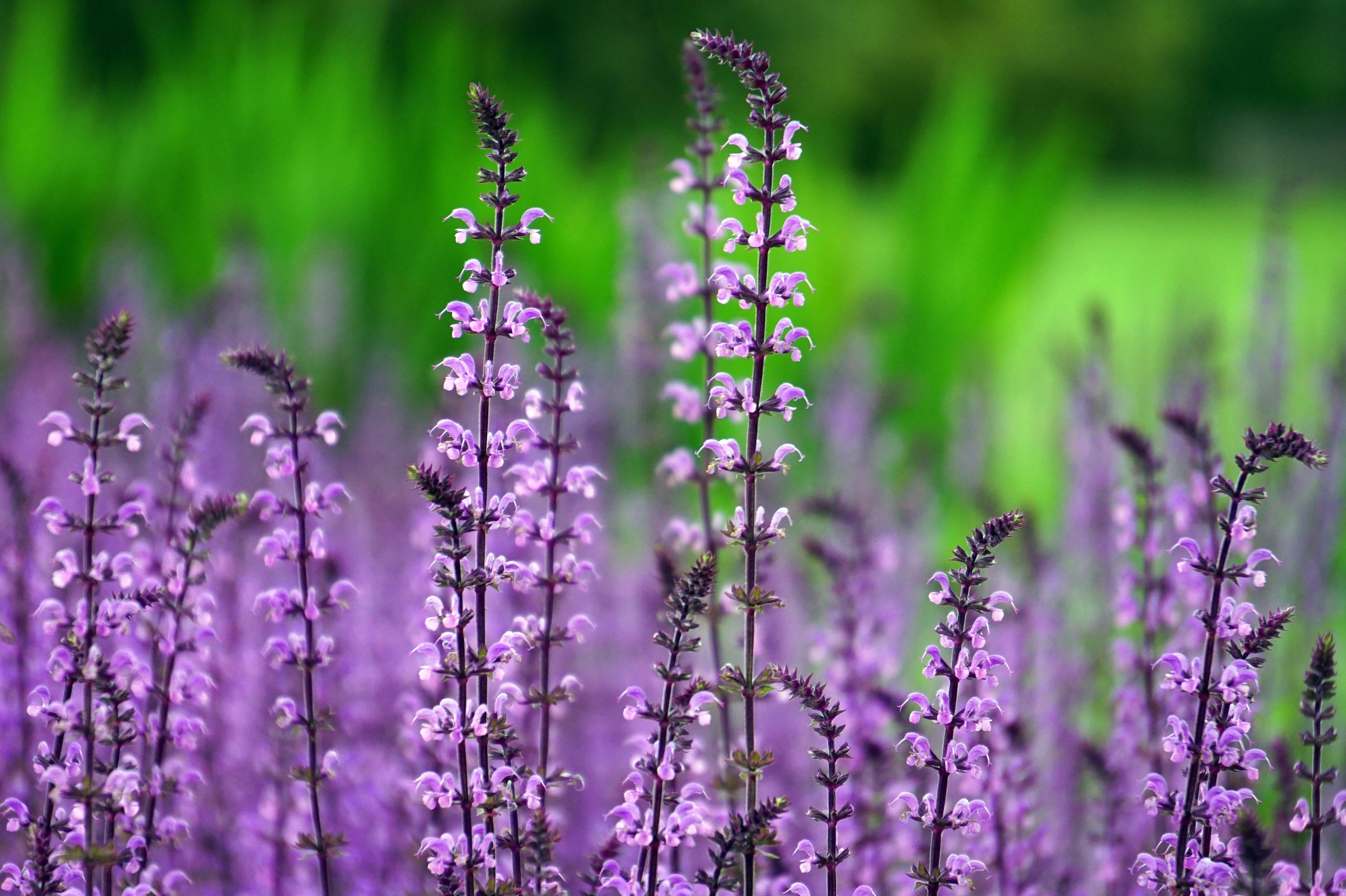 Schwabe Gardening   Imagefilm
